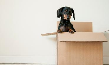 A puppy sitting in a moving box