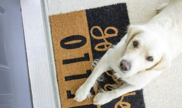 A yellow lab dog lying on a doormat