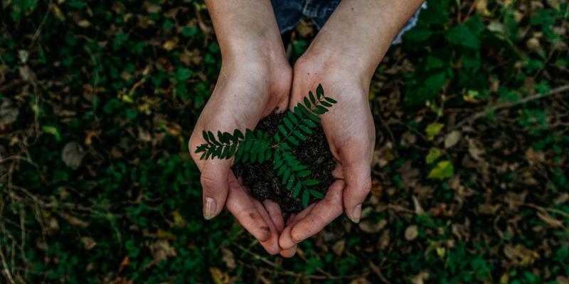 hands holding a seedling