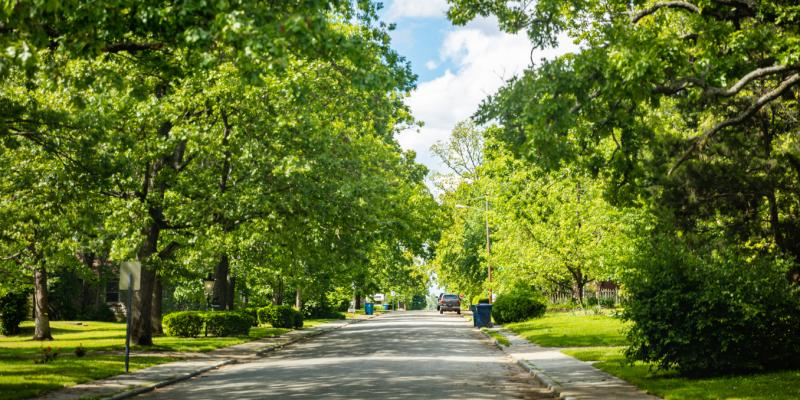 A road surrounded by green trees on both sides