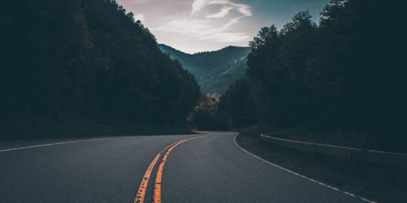 a road and trees